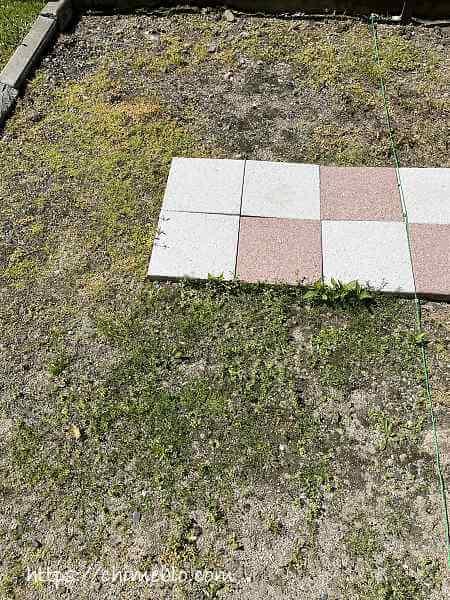 除草剤散布8日目のダイソー除草剤区画