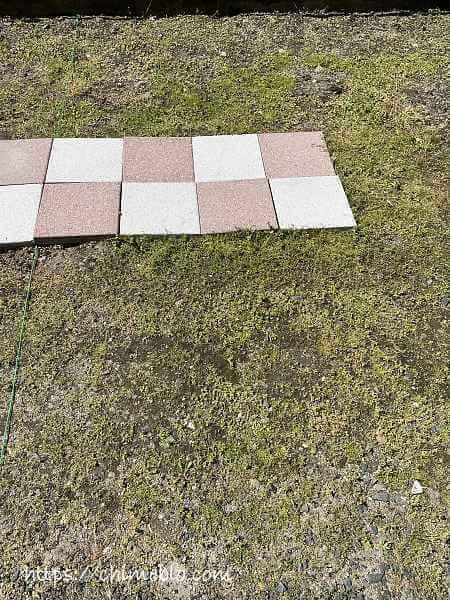 除草剤散布8日目のラウンドアップ区画