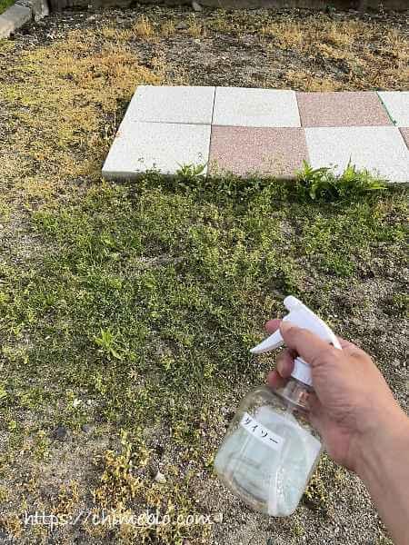 除草剤散布11日目のダイソー区画
